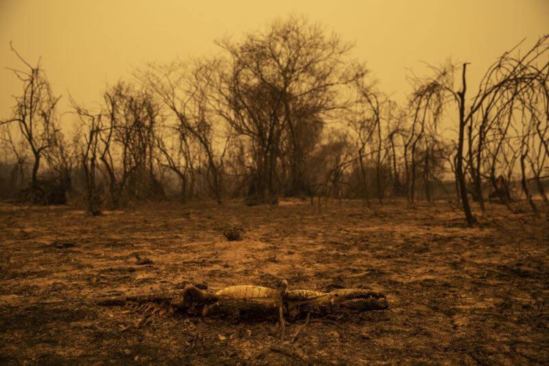 incendies volontaires en amazonie