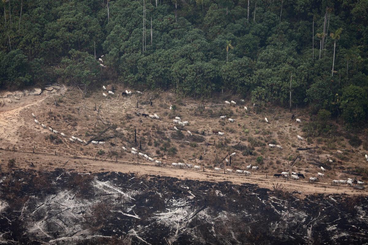 élevage et déforestation